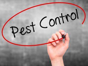 Pest Control - Silverfish